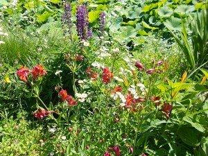 Garden flower border